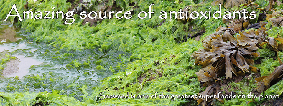 Amazing source of antioxidants: Seaweed is one of the greatest super foods on the planet