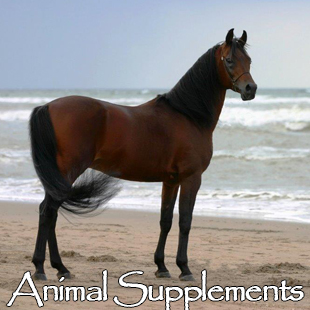 Animal Supplements