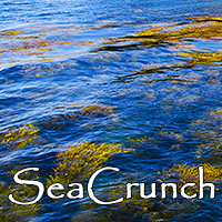SeaCrunch Kelp Snacks