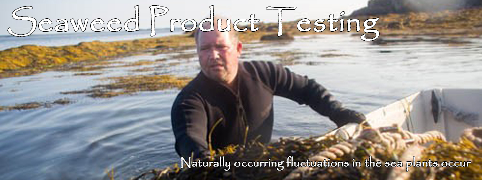 Seaweed Product Testing: The seaweeds we harvest are wild, uncultivated marine algae.
