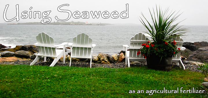 Using Seaweed as an Agricultural Fertilizer