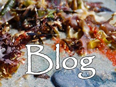 Maine Seaweed Blog